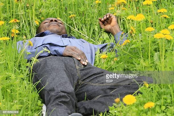 African man lying in dandelion flowers Assy RhoneAlpes France