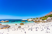 Boulder's Beach is the must-go place to spot African Penguins in Cape Town. They are used to swin around people and visitors, posing for pictures and more.