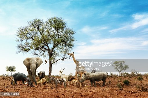 African Safari Animals Meeting Together Around Tree : Stock Photo