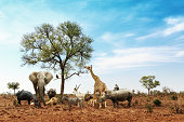Conceptual image of common African safari wildlife animals meeting together around a tree in Kruger National Park