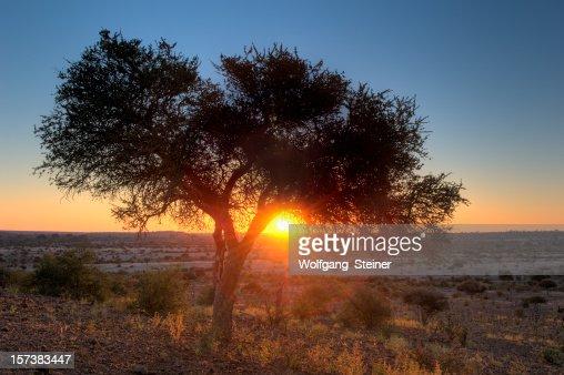アフリカの日没でツリーの下で、サバンナ