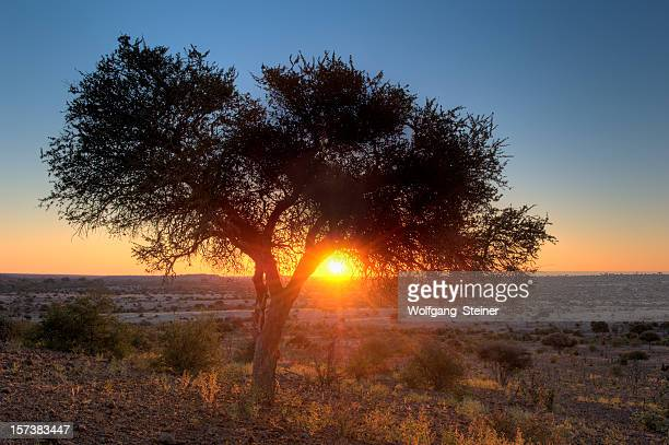 African sunset under a tree in the savannah