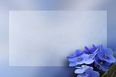 African Violet on a flat framed background space for text