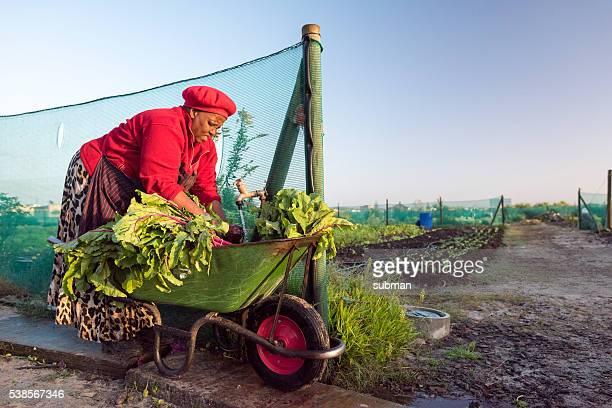 Afrikanische Frau Waschen Gemüse in Schubkarre