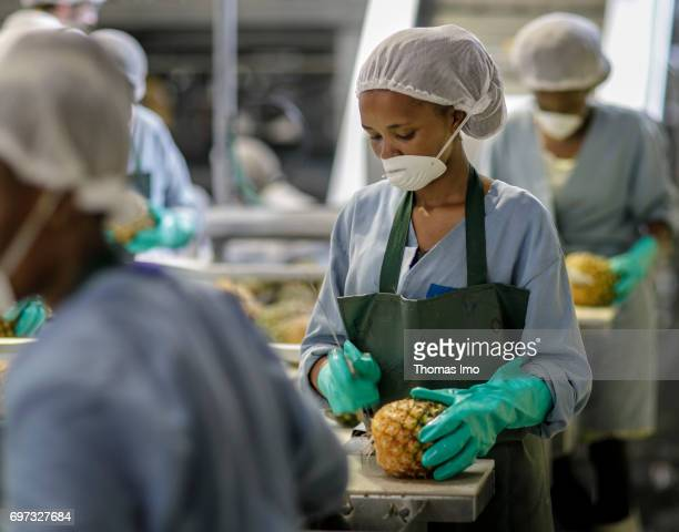 African workers are cutting pineapples on an assembly line Production of pineapple juice at beverages manufacturer Kevian Kenya Ltd on May 18 2017 in...