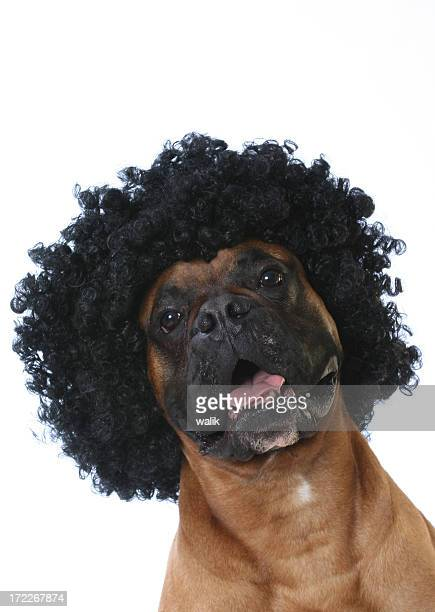 Coiffure Afro chien