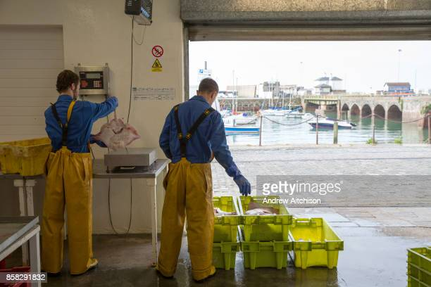 After a fishermans catch is weighed it is sorted into fish type and size and then boxed up accordingly Folkestone Trawlers process manage and market...