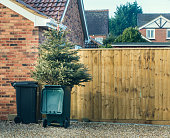 Christmas tree in bin after christman
