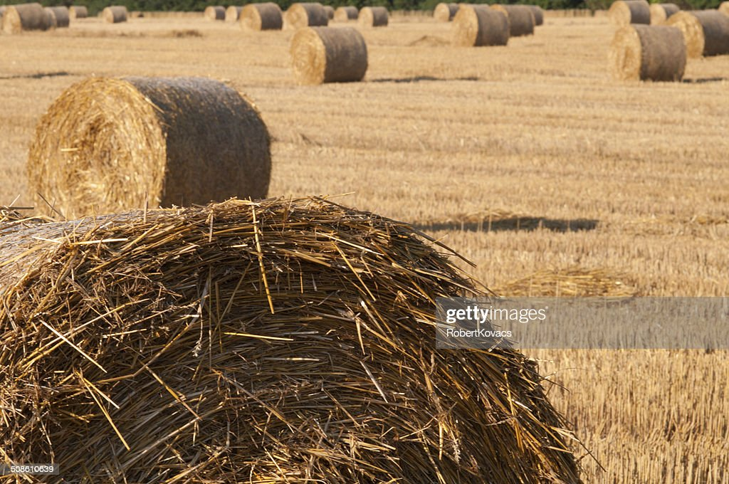 After harvest : Stock Photo
