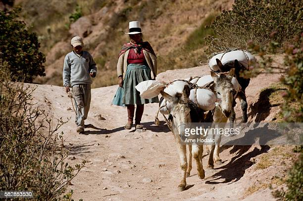 After harvesting the salt the 55 kg sacks are carried also on the backs of burros to the warehouse where salt is taken over by the cooperative...
