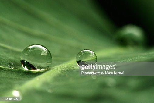 After the rain : Stock Photo