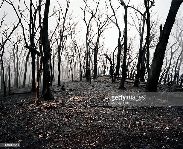 Aftermath, Black Saturday Bush Fires