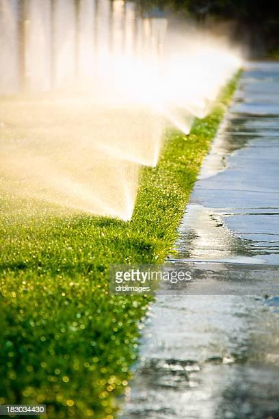 Afternoon Sprinklers