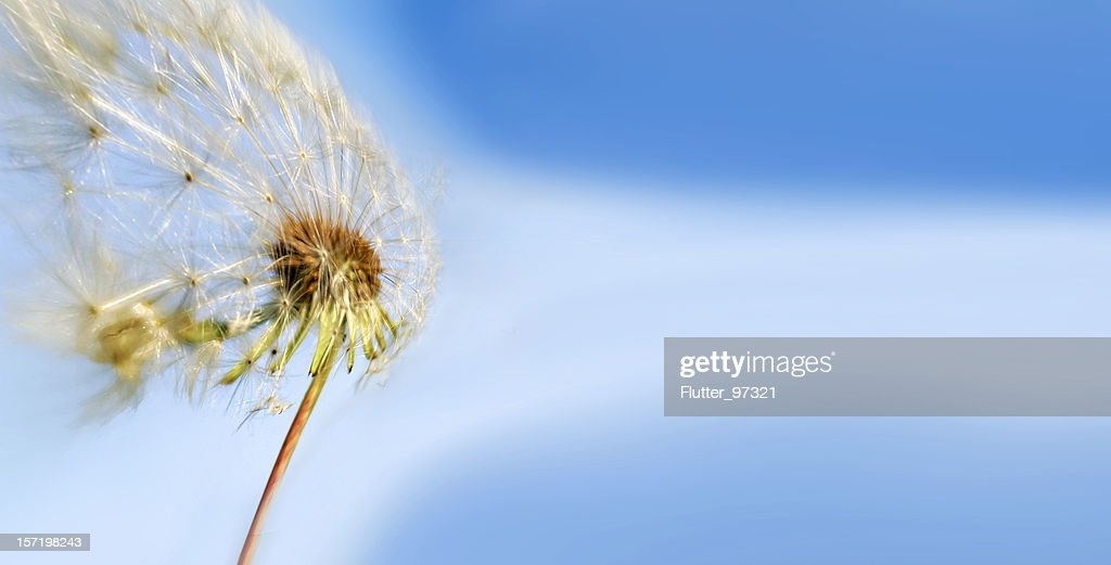 Against the Wind : Stock Photo