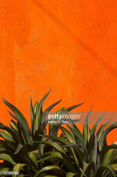 Agave Cactus, Vivid Orange Stucco Wall, Green, Vertical, Copy-space