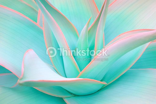 agave leaves in trendy pastel neon colors : Foto de stock