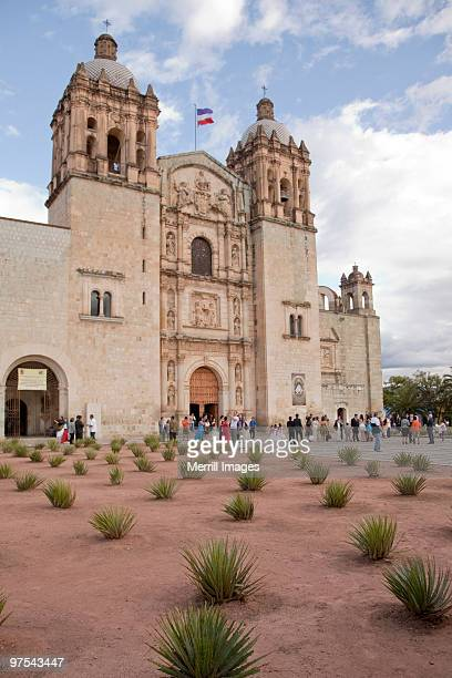 agave plants and Santo Domingo cathedral