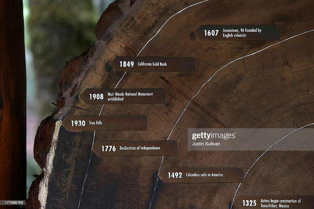 Age rings are shown on a cut section of a Coastal Redwood tree at Muir Woods National Monument on August 20, 2013 in Mill Valley, California. A four-year study by the Save the Redwoods League called 'the Redwoods and Climate Change Initiative' found that due to changing environmental conditions, California's Coast Redwoods and Giant Sequoias are experiencing an unprecedented growth surge and have produced more wood over the past century than any other time in their lives.