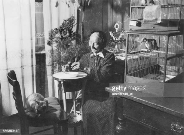 Aged people whitehaired woman feeding pigeon in her living room Vintage property of Ullstein Bild