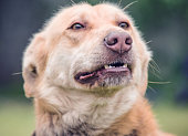 a close-up background photo of an angry cute dog