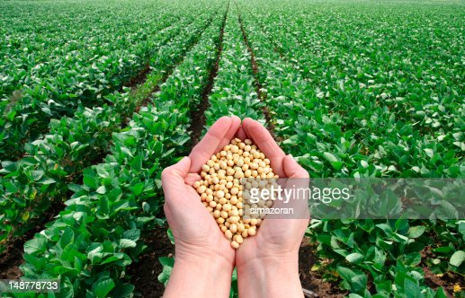 Agricultural concept : Stock Photo
