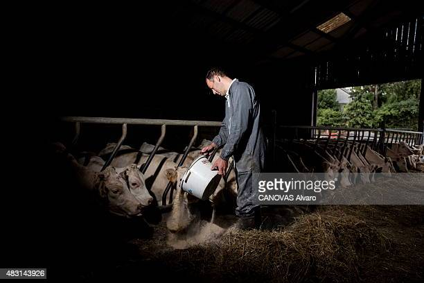 Agricultural crisis in France meeting with Leboucq farmers' family in Calvados Normandy since five generations 41yearold Emmanuel Leboucq with his...