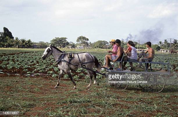 Agricultural field workers riding on a horsedrawn wagon next to a field of cabbage plants Cuba