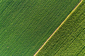 Green abstract image of diagonal lines from different crops in field in early summer, shoot from drone directly above ground
