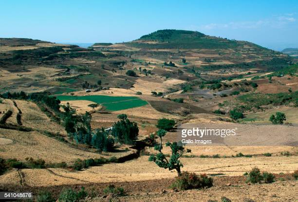 Agricultural Fields in Bale Mountains