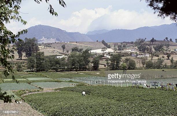 Agricultural lands a man working in his garden field The Chopal Area Guatemala