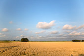 Agricultural landscape with grain crop
