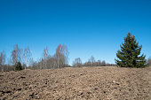Agricultural Plowed field near the forest. Arable spring land.