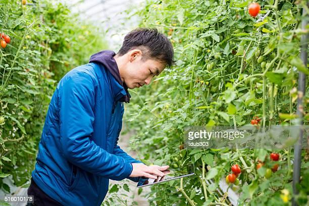 Chercheur agricole à l'aide d'une tablette numérique dans un environnement de serre