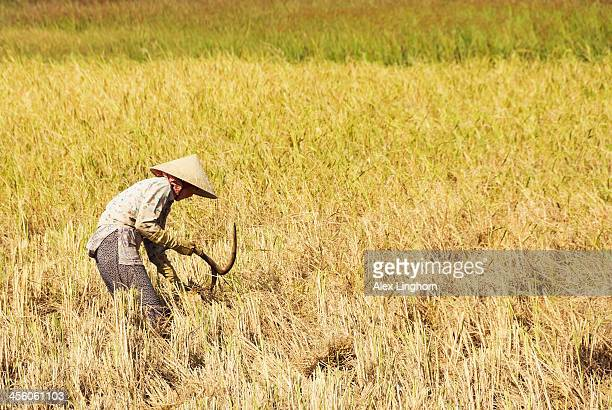 Agricultural worker in conical Asian hat