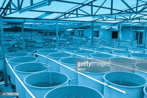 Agriculture aquaculture farm : Stock Photo