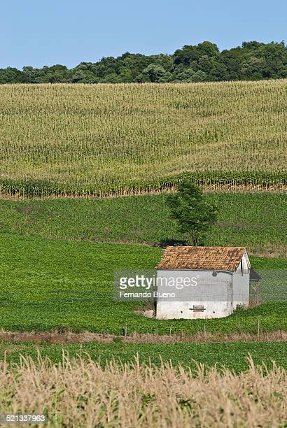 Agriculture at Brazil