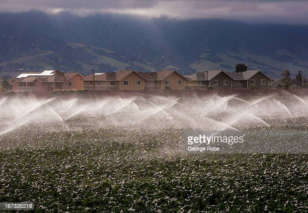 Agriculture backs up closely to a new track of suburban homes on April 4 near Gonzales California The Salinas Valley backdrop for several John...