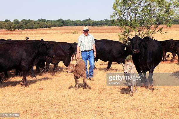 Agriculture: Agriculteur ou rancher avec le bétail et de la sécheresse