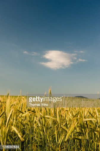 Agriculture field, Baden Wuerttemberg, Germany : Stock Photo