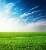 agriculture green grass field and sunset in blue sky with clouds