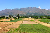 Agriculture In Sawat Valley