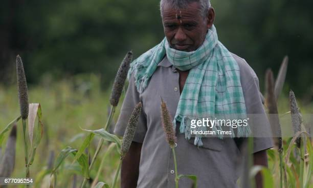Agriculture Maharashtra Drought and Water Scarcity Farmers Vasant Survanshi a helpless farmer of Langarpeth village looking at his two acre crop of...