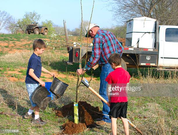 Agriculture: man and boys Planting pear Trees for Wildlife series
