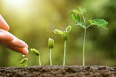 hand of a farmer watering young baby plants seedling in germination sequence on fertile soil with natural green background