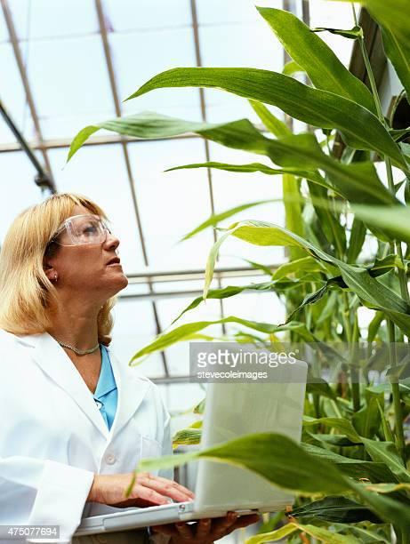 Agriculture de la recherche