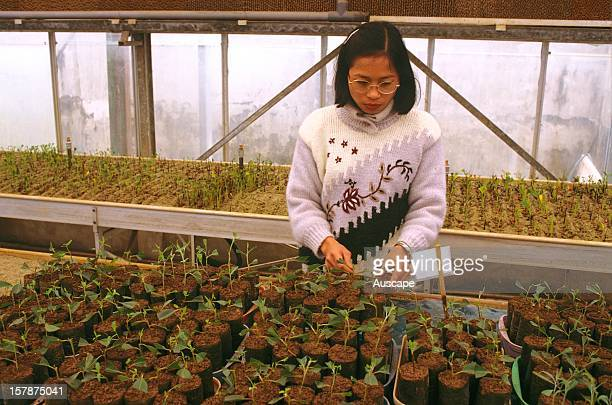 Agroforestry nursery which raises native tree seedlings and encourages the preservation of trees in traditional agricultural practices near Hanoi...