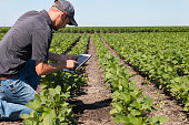 Agronomist Using a Tablet in an Agricultural FieldAgronomist Using a Tablet in an Agricultural Field
