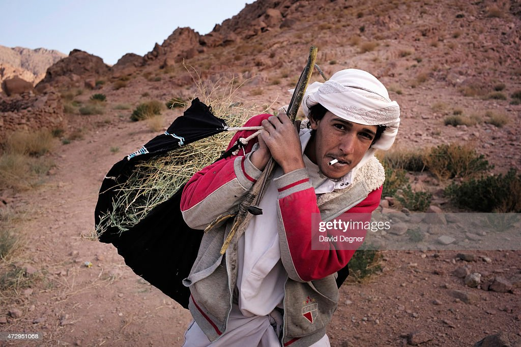 Ahmed Hossam is Bedouin guide who rents out his camel to carry supplies and tourists through the mountains of South Sinai on April 17, 2015 near St. Catherine, Egypt. He is gathering weeds and thorns to feed his camel. In a normal day he receives 125 EGP a day, about $16. Bedouins guides in the Sinai peninsula face stiff competition and many Sinai Bedouins are unemployed due to the lack of employment opportunities.