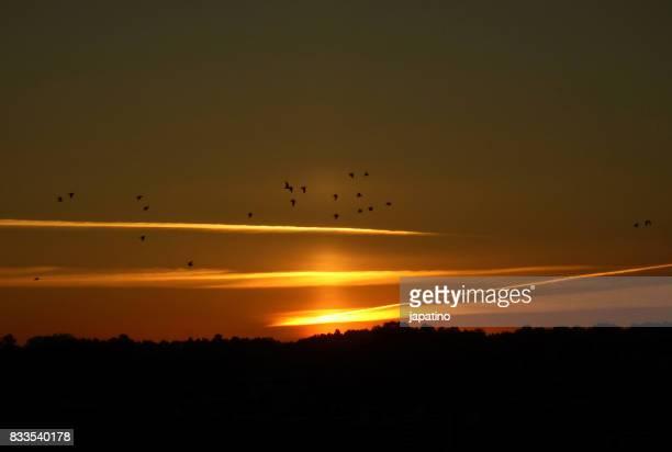 Aircrafts and birds at dawn
