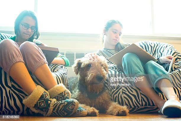 Airdale Terrier Cachorro está próximo de duas meninas adolescente